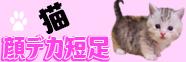 ねこblogのイメージ